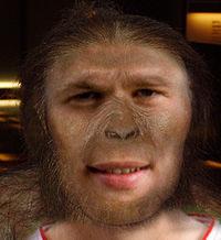 Australopithecus_afarensis_new