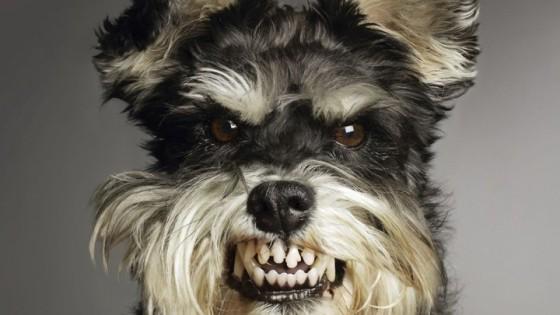 funny-mean-dog.jpg